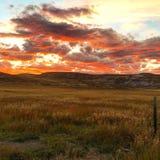 Roter Sonnenuntergang über goldenen Feldern Lizenzfreie Stockfotos