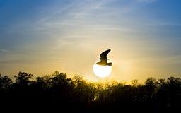 Roter Sonnenuntergang. Vogel und Sonne stockfotografie