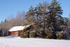 Roter Stall und Bäume im Winter-Schnee Lizenzfreie Stockbilder