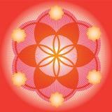 Roter Startwert für Zufallsgenerator einer Blume des Lebens Stockfoto
