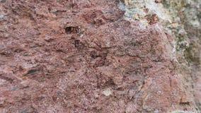 Roter Steinbeschaffenheitshintergrund Filipowice-Tuff Stockfoto