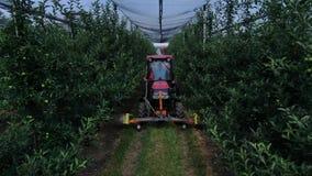 Roter Traktor fährt durch den Apfelgarten und sprüht das Düngemittel stock video