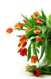 Roter Tulpeblumenstrauß Stockfotos