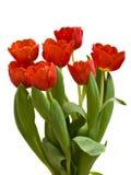 Roter Tulpeblumenstrauß Stockbilder