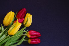 Roter und gelber Tulpenblumenstrauß des neuen Frühlinges blüht Nahaufnahmemakro in der Ecke der untereren Linke auf Draufsicht w  Stockfoto