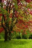 Roter und grüner Baum Stockfoto