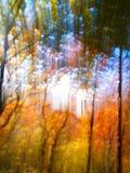 Roter und grüner Herbstwald Stockbild