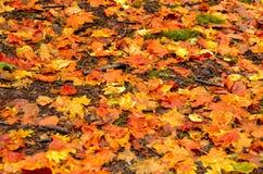 Roter und orange Autumn Leaves Background stockfoto