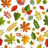 Roter und orange Autumn Leaves Background Lizenzfreie Stockfotos
