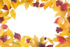 Roter und orange Herbstlaub lokalisiert auf Weiß stockbild