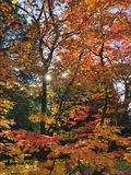 Roter und Orangenbaum Stockfotografie