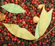 Roter und schwarzer Pfeffer der Nahaufnahme mit Lorbeerblättern Stockbild
