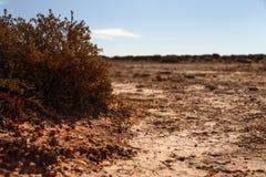 Roter und trockener Boden in Australien stockbilder