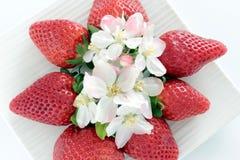 Roter und weißer Frühling Lizenzfreies Stockbild