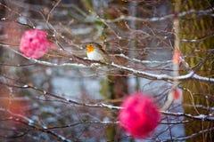 Roter Vogel auf Baum Stockfotografie