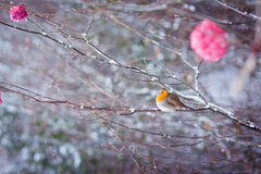 Roter Vogel auf Baum Lizenzfreies Stockfoto