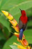 Roter Vogel mit Blume Stockfoto