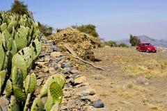 Roter Volkswagen und Kaktus Stockfotos