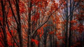 Roter Wald Stockfoto