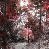 Roter Wald Lizenzfreies Stockfoto