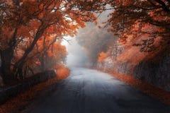 Roter Wald des mystischen Herbstes mit Straße im Nebel Stockfotografie