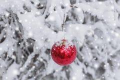Roter Weihnachtsball, der an einer schneebedeckten Niederlassung im Winterwald hängt Stockfoto