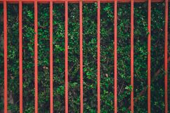 Roter Zaun auf der gr?nen Baumwand stockfotos
