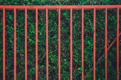 Roter Zaun auf der gr?nen Baumwand lizenzfreies stockfoto