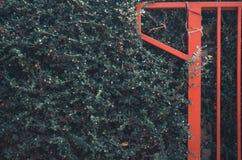 Roter Zaun auf der gr?nen Baumwand lizenzfreie stockfotografie