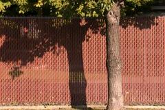Roter Zaun hinter einem Baum Stockbild