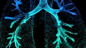 Rotera 360 grad av mänskliga lungor r Sömlös kretsa rörelse stock illustrationer
