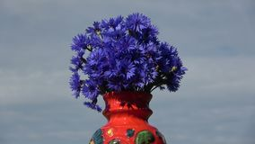 Roterande röd keramisk vas med den blåa blåklintbuketten