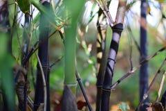 Roterande svart för bambu arkivbilder