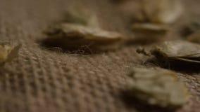 Roterend schot van gerst en andere bierbrouweningrediënten stock videobeelden