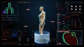 Roterend Vrouwelijk Menselijk cardiovasculair systeem, skeletachtige structuur, beensysteem in digitale vertoningsdashboard Blauw vector illustratie