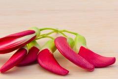 Rotes Agasta auf hölzernem Hintergrund Stockfotografie