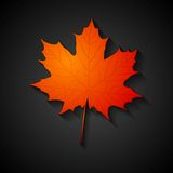 Rotes Ahornblatt Rot und Orange färbt Efeublattnahaufnahme Lizenzfreie Stockfotografie