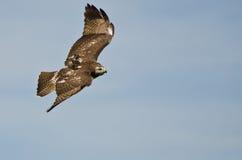 Rotes angebundenes Falke-Flugwesen in einem blauen Himmel stockfotos