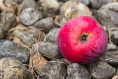 Rotes Apple auf einem Bett von Felsen Lizenzfreie Stockfotografie