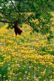 Rotes Band auf dem Baum auf dem Hintergrund des L?wenzahns lizenzfreie stockfotos