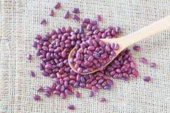 Rotes Bean Stockfoto
