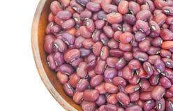 Rotes Bean Lizenzfreies Stockbild