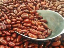 Rotes Bean Lizenzfreie Stockfotos