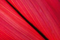 Rotes Blatt Lizenzfreie Stockbilder