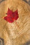 Rotes Blatt auf Baumstumpf Lizenzfreie Stockfotografie