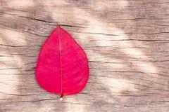 Rotes Blatt auf dem hölzernen Plattenblick schön Stockfotografie