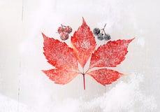 Rotes Blatt auf einem schneebedeckten Hintergrund Lizenzfreie Stockfotografie