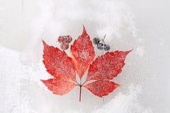 Rotes Blatt auf einem schneebedeckten Hintergrund Lizenzfreie Stockbilder