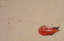 Rotes Blatt auf Hintergrund Sommermuster mit gelbem Sand Stockfotografie