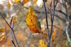 Rotes Blatt des Herbstes auf der Niederlassung Lizenzfreie Stockfotos